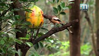 A real bird lover from India. This is the way to be friendly with bird.
