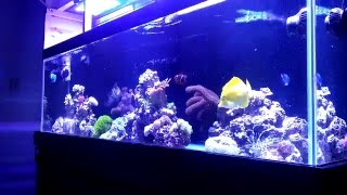 Feeding A Snowflake Eel   Beginner Guide To Saltwater Aquariums