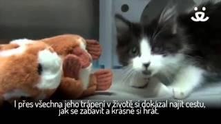 Koťátko uniklo jenom o vlásek smrti a možná nás čeká i šťastný konec
