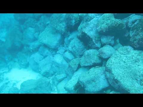 Galapagos – Diving