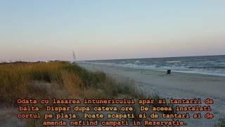 Plaja Vadu - Corbu - Constanta. Plaja Salbatica si Naturala. Sfaturi Utile