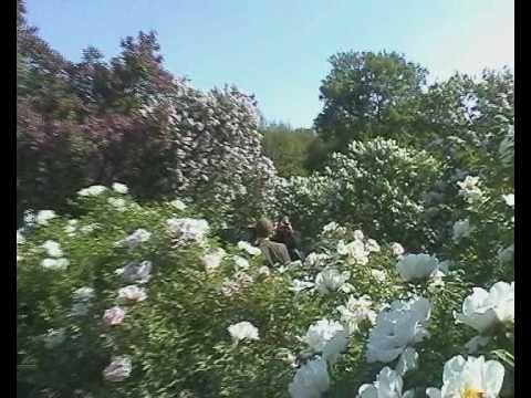 Ukraine to meet #2. Kiev Best Places. Kiev Botanik Garden.