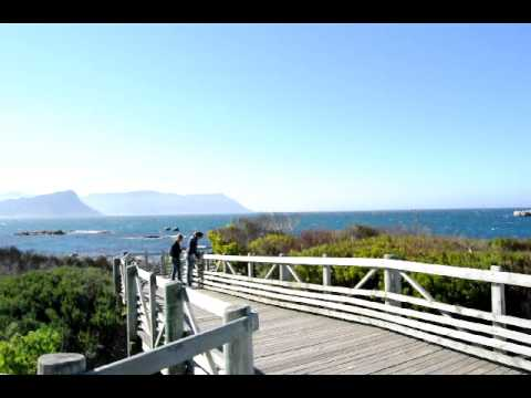 Simon's Bay and the Penguins