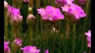 talking flowers 1