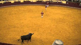 Grupo de Forcados Amadores de Lisboa - Gonçalo Maria Gomes - Campo Pequeno 28-07-11 - 1ª