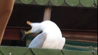 SeaGull ft Gorillaz - Feel Good Inc