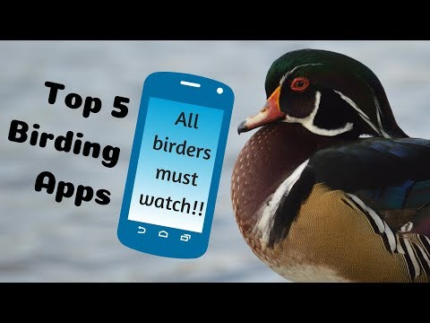Top 5 Bird Watching Apps