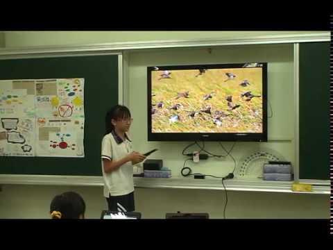 探索麻雀 - YouTube