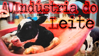 A Indústria do Leite (Sem Cenas Fortes)