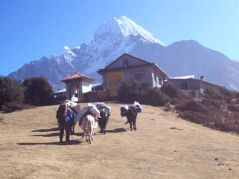 Namche herd, Nepal