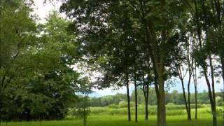 Piet Veerman - Green green grass of home