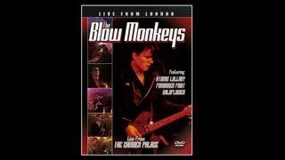 The Blow Monkeys - Animal Magic