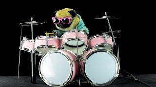 Dog is playing drums - Metallica Enter Sandman