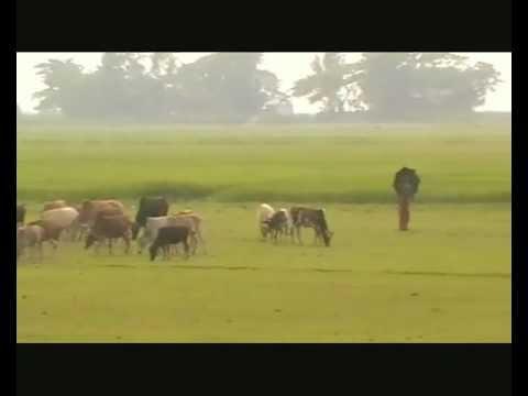 Amar Gram Amar Desh in Nabigonj Bazar Bangladesh Desher gaan
