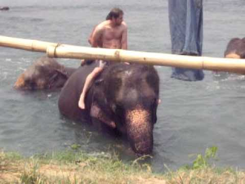 Elephant bathing – special shaky dance technique