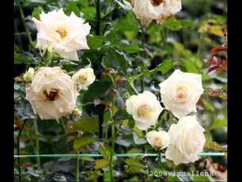Vallée du roses- Dadés