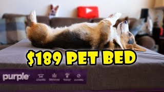 Bought Purple's Pet Bed for My Dog! || Extra After College
