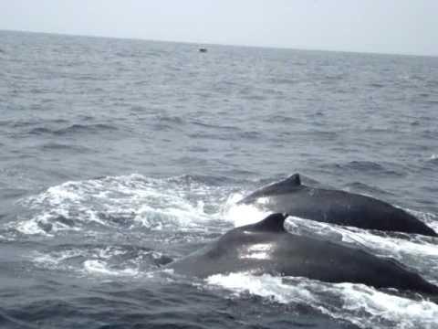 Ballenas primer plano