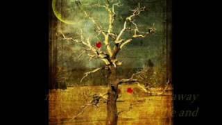 FOREVER-THE AMBASSADOR