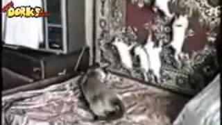 VIDEOS DE GATOS CHISTOSOS   YouTube
