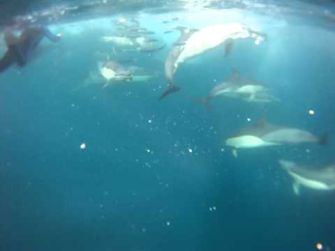 Awesome Sardine Run South Africa 2011