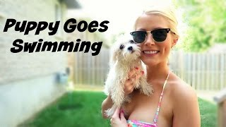Talking Puppy Goes Swimming for the First Time!!