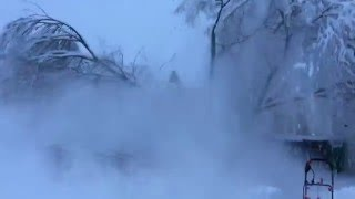 Tree splitting due to heavy snow