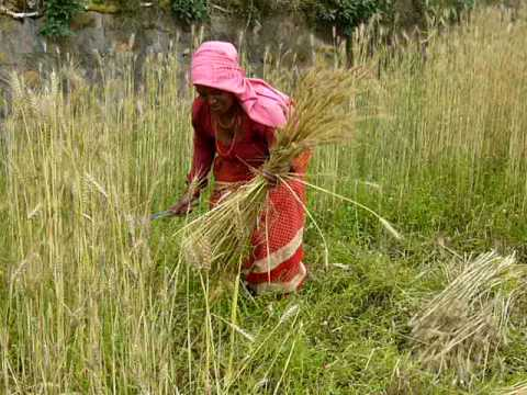 Homestay in Nepal, www.homestaynepal.com, Part 14