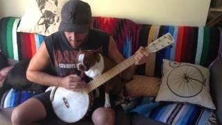 Boston terrier Clementine loves Russian music