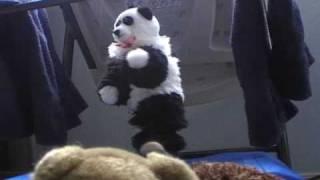 Mr Panda rockstar LIVE