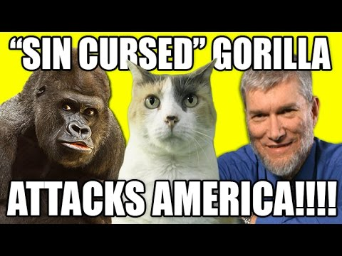 "Sin-Cursed Gorilla"" Attacks America"
