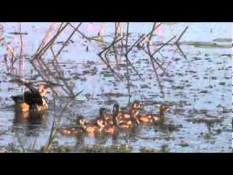 Umkhuze Game Reserve – South Africa Travel Channel 24