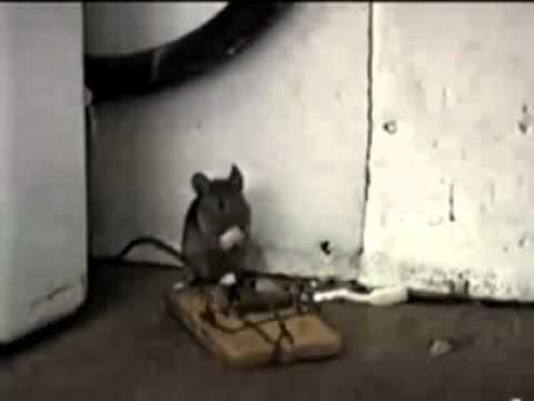 Çin malı fare kapanı :=) Emekforum.net
