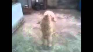 Todo Mundo Dançando Passinho Do Cachorrinho No Cio - Mc Menor do Nv