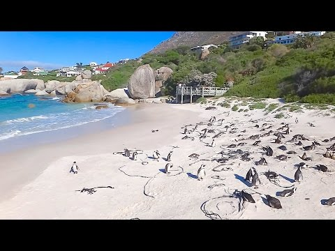 Penguin's Beach in South Africa