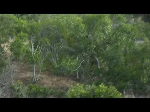 GSC 0758 – Our third leopard sighting – Shawn & Silmiya Hendricks