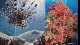 Sergey Grischuk - Ocean Secrets