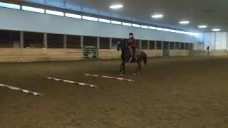 Vanessa Cantering ground poles