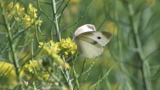 蝴蝶 & 蜜蜂 慢速優雅飛行