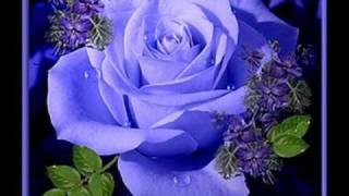 paper roses marie osmond.wmv