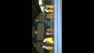 IVES SCHOO; NILAMBAY FOLK DANCE by. GRDAE 3. 1/30/17