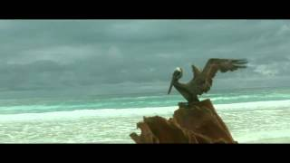 Mr Probz   Waves Official Video Robin Schulz Remix mp4