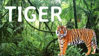 Learn Real Jungle Animal Sounds with Surprise Time, Real Animal Sound Effects