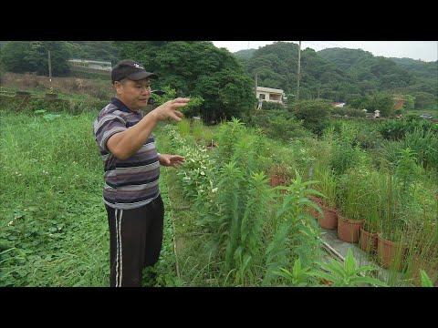 我們的島 第708集 我的水草世界 (2013-5-27) - YouTube