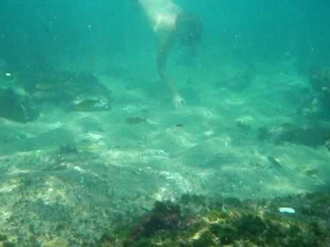 la plage de l'arapède (la rapette) a Bologhine, Alger. (sous l'eau) 2