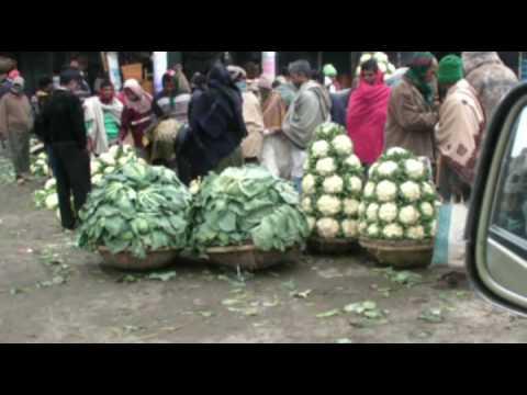 Vegetable wholesale market in Gulshan, Dhaka, Bangladesh