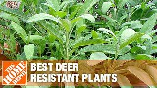 How to pick deer resistant plants.