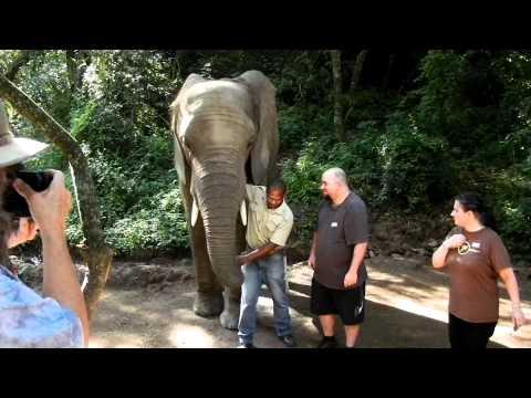 elephantkisses.MOV