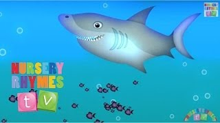 ANIMALS IN THE OCEAN | Nursery Rhymes TV. Toddler Kindergarten Preschool Baby Songs.