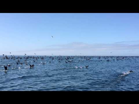 Birds at Gansbaai, South Africa